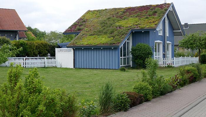techos verdes extensivo